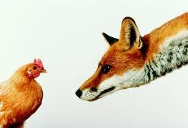 foxhen